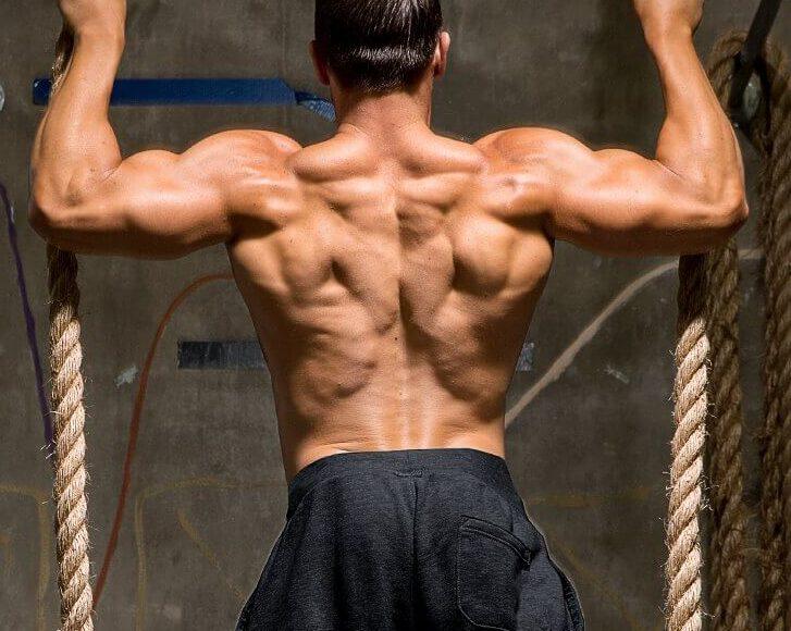 تمارين عضلات الظهر
